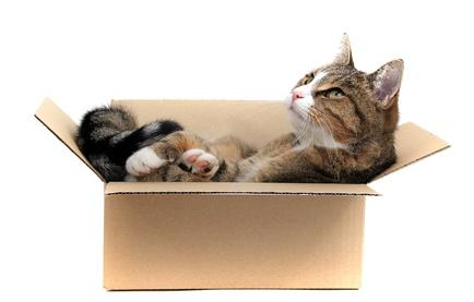 Warum lieben KatzenKartons?