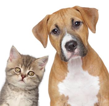 Blogstart: Was ist gesund für Hund undKatze?