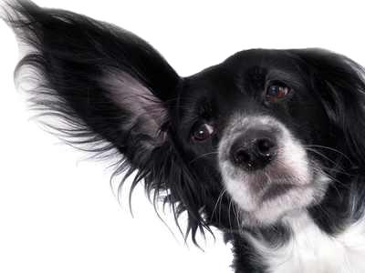 10 Tipps für Hund und Katze gegen Panik anSilvester