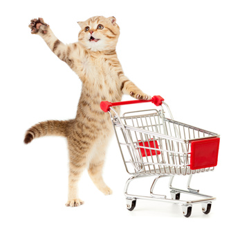 Was würde deine Katzekaufen?