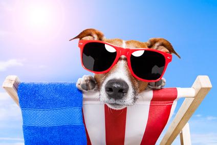 Hund und Hitze – Tipps für einen heißenSommer