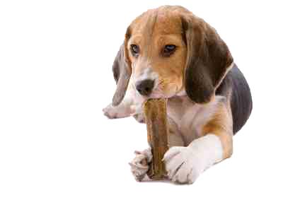 Hunde auf BARFumstellen