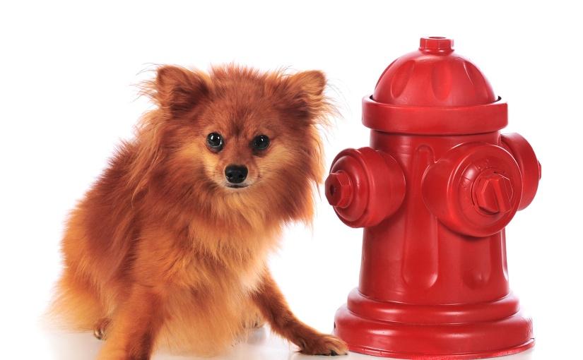 Barf – Warum trinkt mein Hund/ meine Katze weniger? Muss ich Salzfüttern?